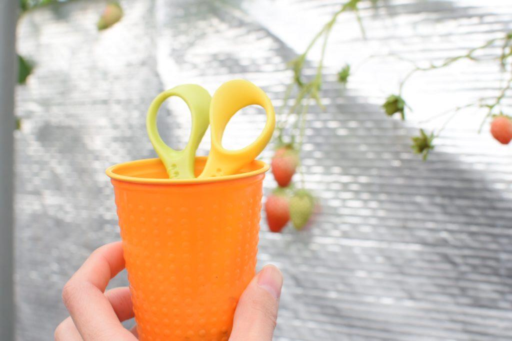大分市ドームいちご園で借りれるカップとハサミ